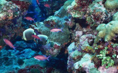Año Internacional de los arrecifes de coral