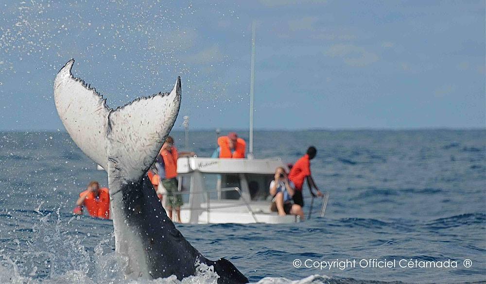Tienes una cita con las ballenas en el Hotel Solidario Mangily