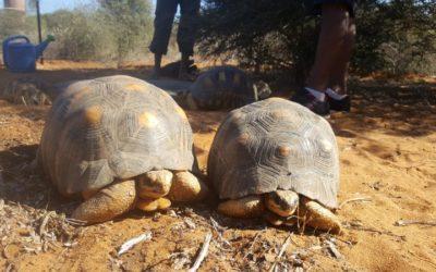Nuevos huéspedes en nuestro Centro de Recuperación de la fauna