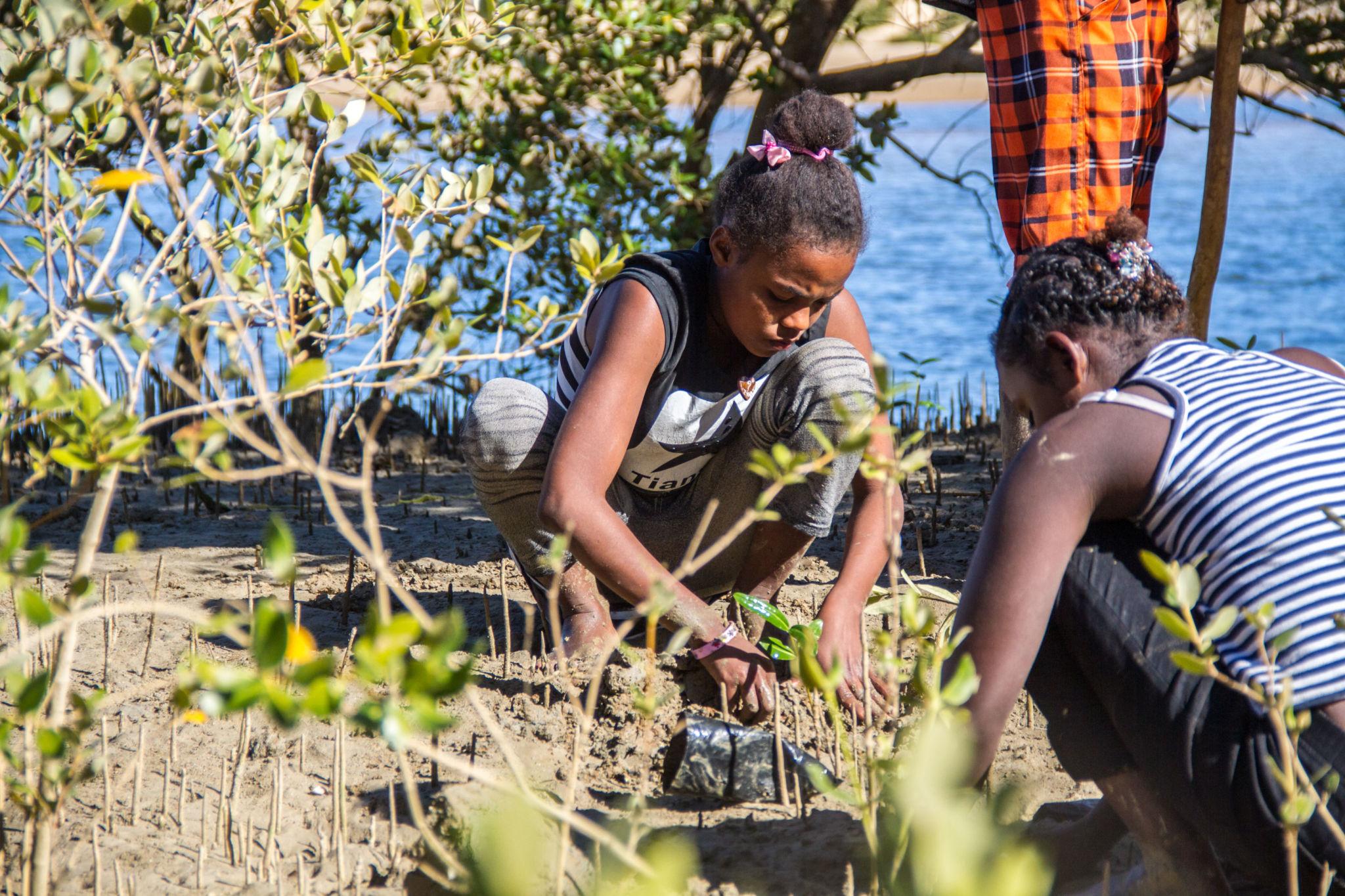 Plantation-Mangrove-9971