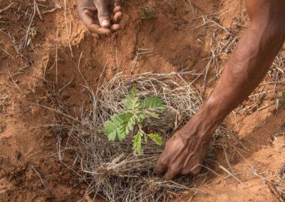 Micro-Reserva de Endemismos del Suroeste de Madagascar