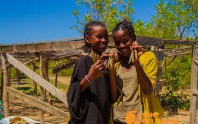 Participantes del Centro de Arte y Música plantan 3000 brotes de manglares
