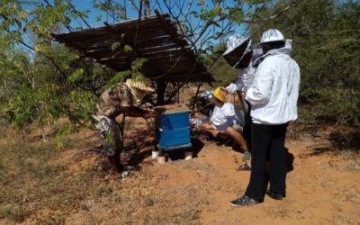 Realizamos la primera recolecta de miel en Mangily