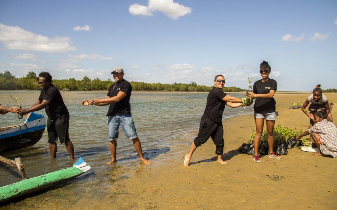 Celebramos el Día de los Manglares plantando 4200 brotes de manglar